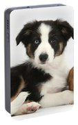 Border Collie Pup And Netherland-cross Portable Battery Charger
