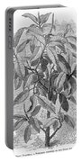 Botany: Ficus Elastica Portable Battery Charger