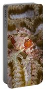 Boxing Crab In Raja Ampat, Indonesia Portable Battery Charger