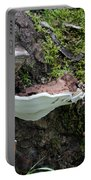 Bracket Fungus Portable Battery Charger