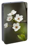 Bradford Callery Pear Tree Blossoms - Pyrus Calleryana Portable Battery Charger