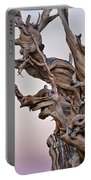 Bristlecone Pine - Early Morning - 1 Portable Battery Charger