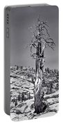 Bristlecone Pine - High Sierra Portable Battery Charger
