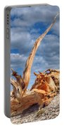 Bristlecone Pine In Repose Portable Battery Charger