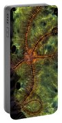 Brittle Star On Sponge, Belize Portable Battery Charger