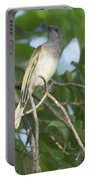 Brown Honeyeater Portable Battery Charger