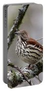 Brown Thrasher - Spot Portable Battery Charger
