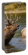Bugling Bull Elk And 2 Female Cows In Estes Lake  Co Portable Battery Charger