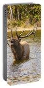 Bugling Bull Elk And Calf Colorado Rut 4 Portable Battery Charger