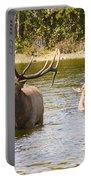 Bugling Bull Elk And Calf Colorado Rut 5 Portable Battery Charger