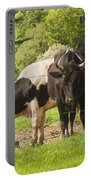 Bull And Cows Grazing On Grass In Farm Maine Portable Battery Charger