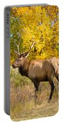 Bull Elk Autum Portrait Portable Battery Charger