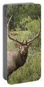 Bull Elk Eyes Portable Battery Charger by James BO  Insogna
