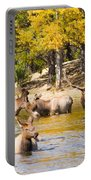 Bull Elk Watching Over Herd 4 Portable Battery Charger