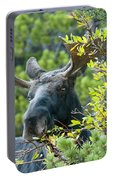 Bull Moose At Dusk Portable Battery Charger