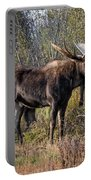 Bull Tolerates Calf Portable Battery Charger