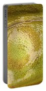 Bullfrog Ear Portable Battery Charger by Ted Kinsman