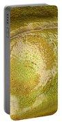 Bullfrog Ear Portable Battery Charger