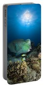 Bumphead Parrotfish, Australia Portable Battery Charger