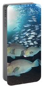 Bumphead Parrotfish Portable Battery Charger