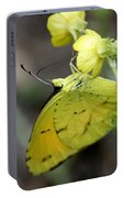Butterfly - Yellow Sulphur On Yellow Portable Battery Charger