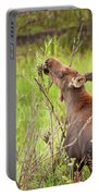 Calf In The Willows Portable Battery Charger
