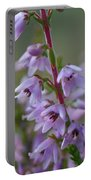 Calluna Vulgaris 4  Portable Battery Charger