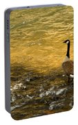 Canadian Goose In Golden Sunlight Portable Battery Charger