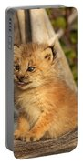 Canadian Lynx Kitten, Alaska Portable Battery Charger