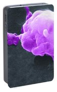 Cancer Cell Death Sequence, Sem Portable Battery Charger