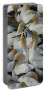 Cape Gannets Portable Battery Charger