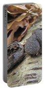 Carbon Balls Fungi - Daldinia Concentrica Portable Battery Charger