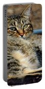 Cat Nap Interuption Portable Battery Charger