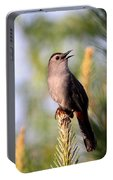 Catbird In Pine Portable Battery Charger