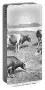 Cattle, 1888 Portable Battery Charger