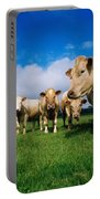 Cattle, Charolais Portable Battery Charger