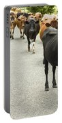 Cattle Drive On A Road  Portable Battery Charger