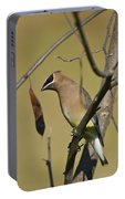Cedar Waxwing - 2491 Portable Battery Charger
