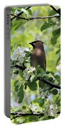 Cedar Waxwing Among Apple Blossoms Portable Battery Charger