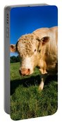 Charolais Bull, Ireland Portable Battery Charger