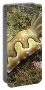 Chromodoris Coi Beige Nudibranch Portable Battery Charger