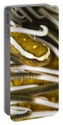 Clingfish On Crinoid, Australia Portable Battery Charger