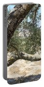 Close Up Olive Tree Portable Battery Charger