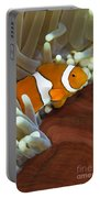 Clown Anemonefish In Anemone, Great Portable Battery Charger