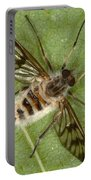 Cluster Fly Killed By Parasitic Fungus Portable Battery Charger