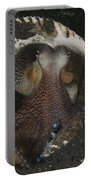 Coconut Octopus In Shell, North Portable Battery Charger