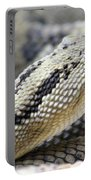 Coiled In Wait Portable Battery Charger