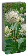 Common Buttonbush - Cephalanthus Occidentalis Portable Battery Charger