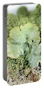 Common Greenshield Lichen Portable Battery Charger by Ted Kinsman