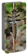 Common Whitetail Dragonfly - Plathemis Lydia - Female Portable Battery Charger